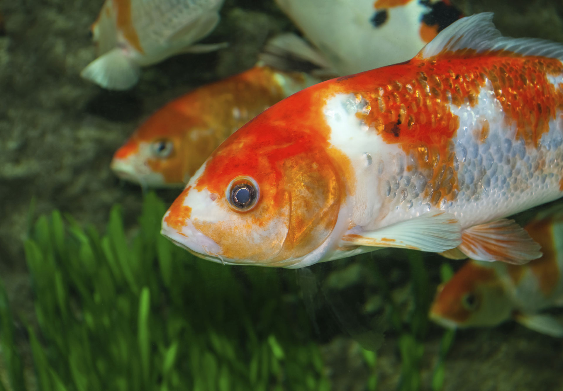Pet fish favorites