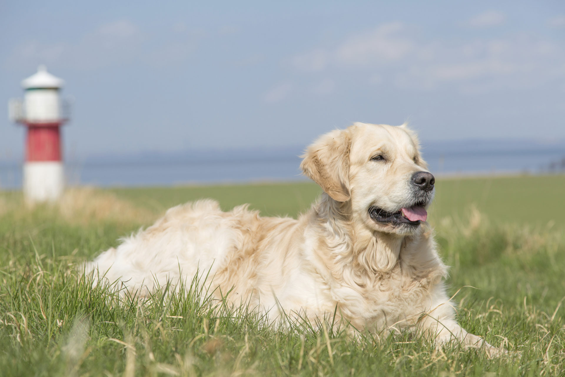 6 Beach-friendly dogs