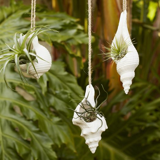 Shell decor- Hanging conch planter