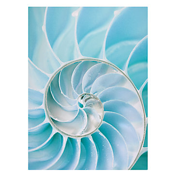Shell decor- Shell painting