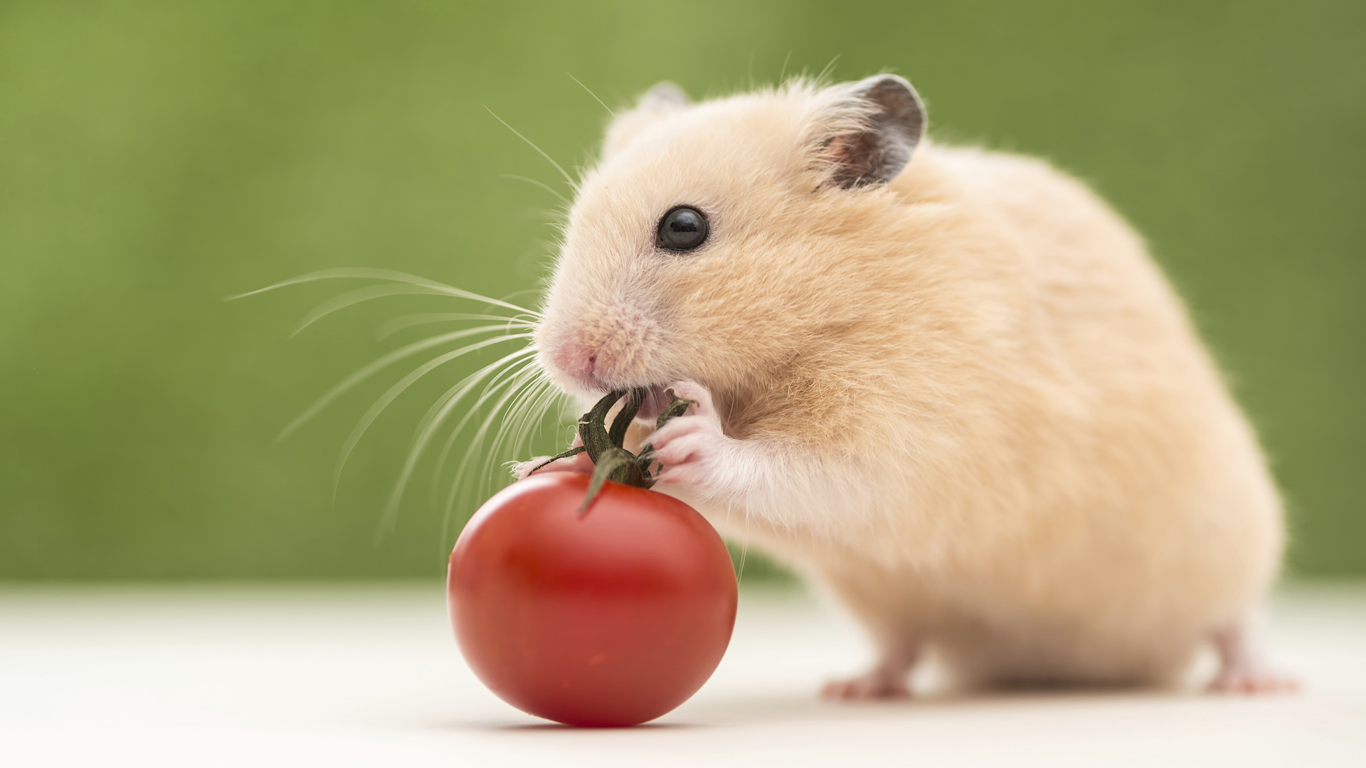 hamster-pro