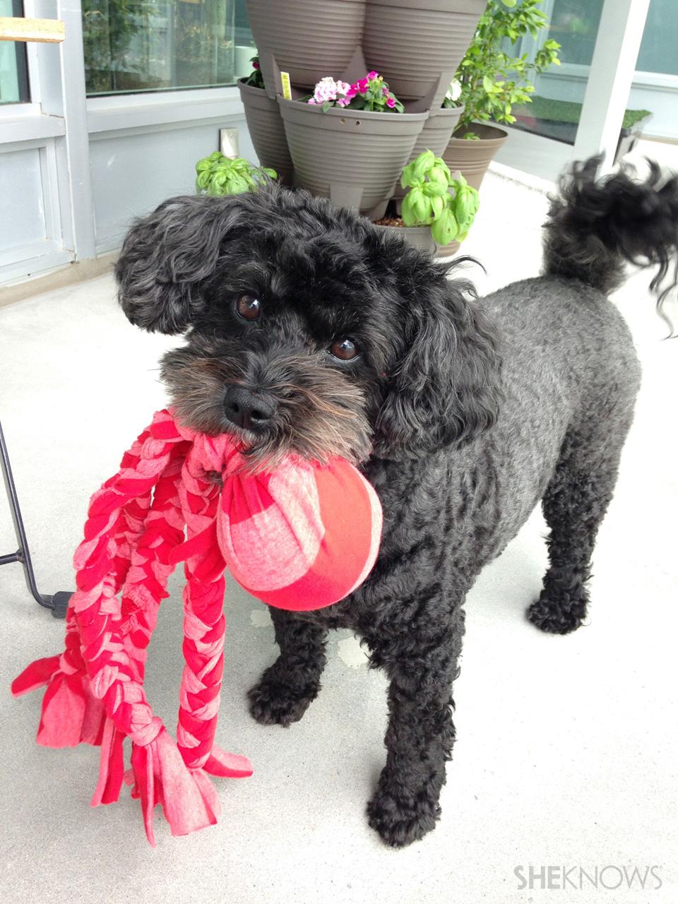 Don't toss that old T-shirt! Snip it up to make this toy for your furry friend.