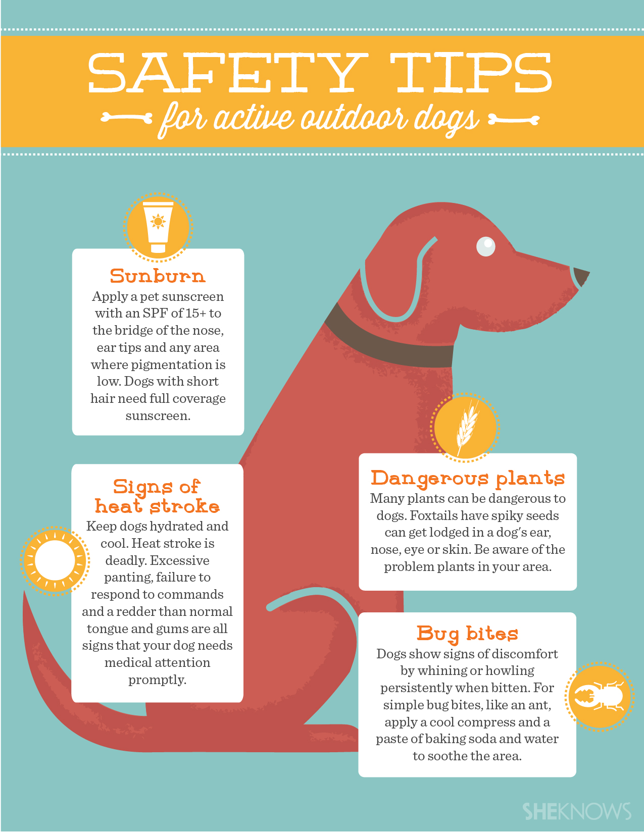 5 Tips To Keep Your Active Outdoor Dog Safe This Summer
