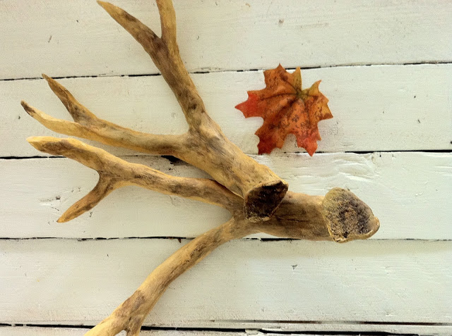 Antler branch table decor