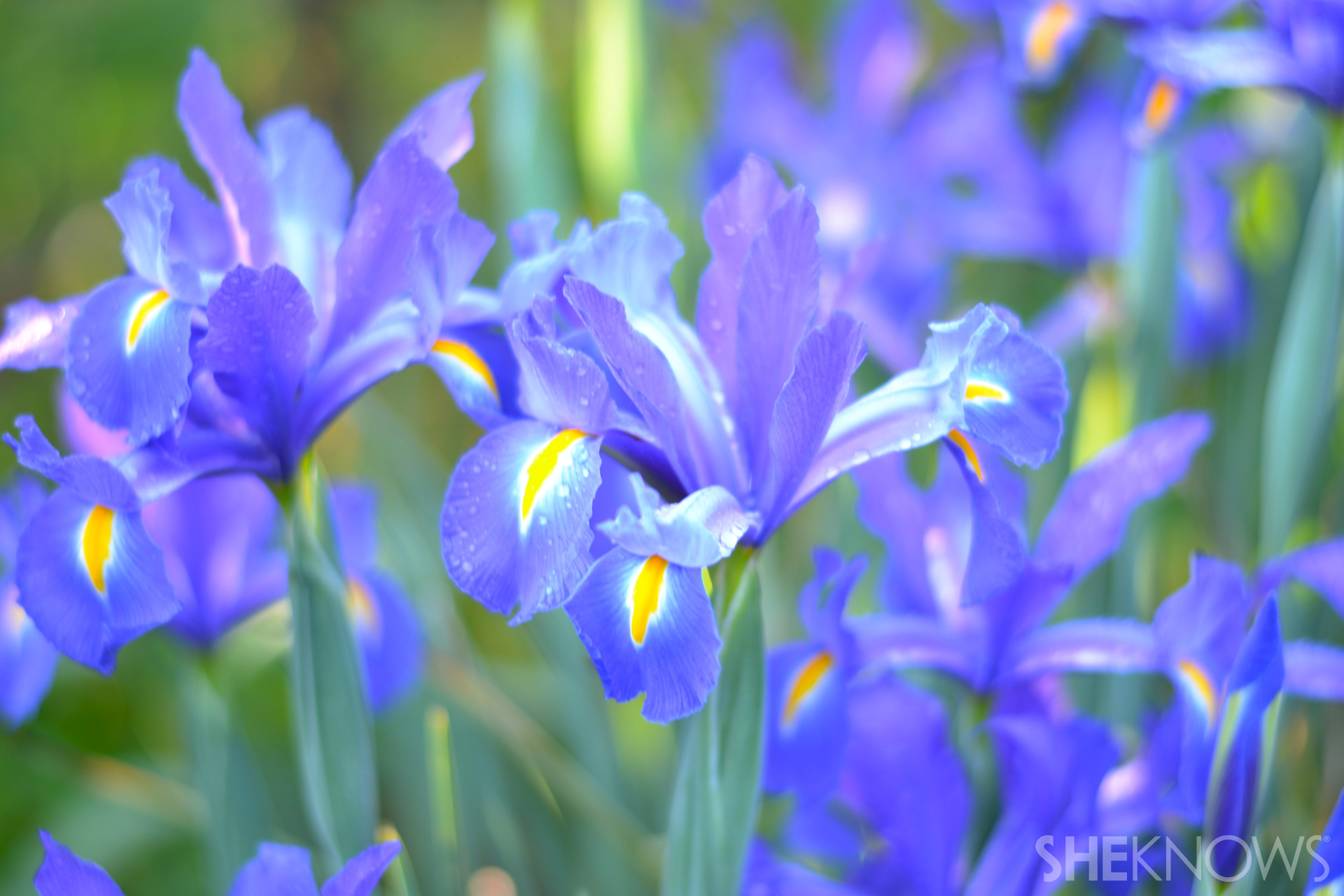 Capture great shots of your garden with these helpful photography tips