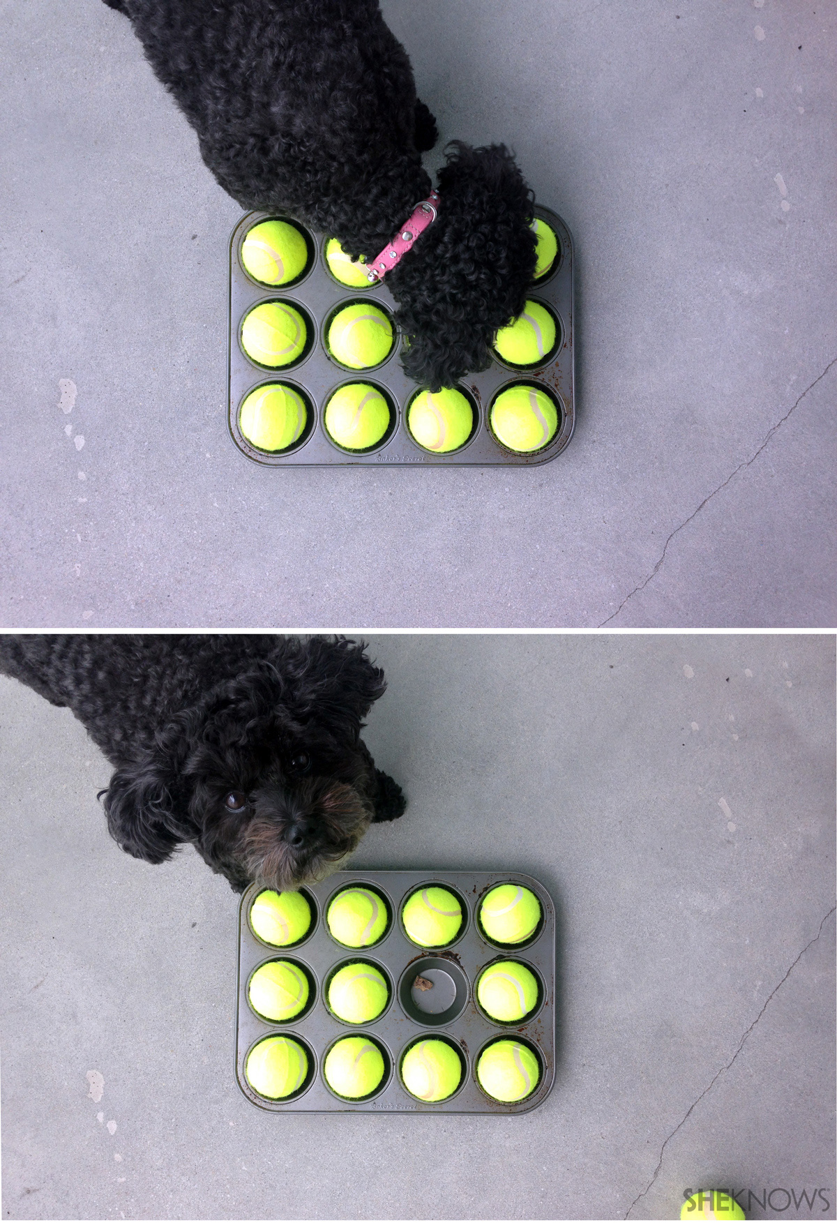All you need is a muffin tin, 12 tennis balls and a pup for a doggone good time