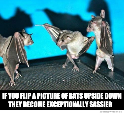 Upside Down Sassy Bats