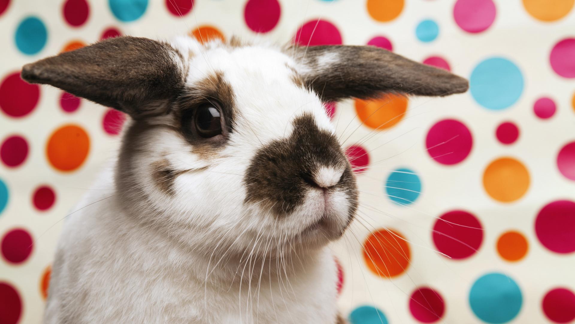 Baby named Bunny
