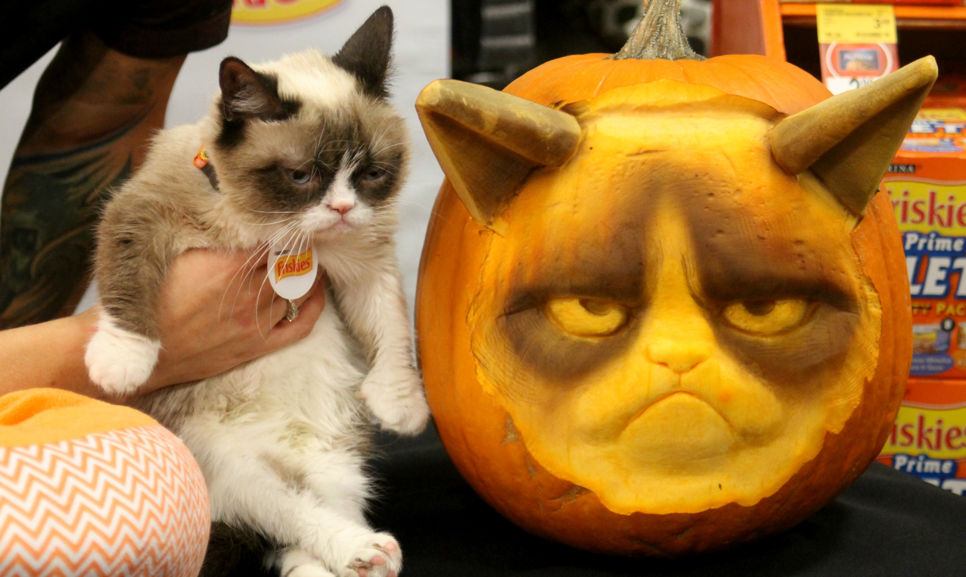 15 Amazing Paw-mpkin Carvings | PawPost