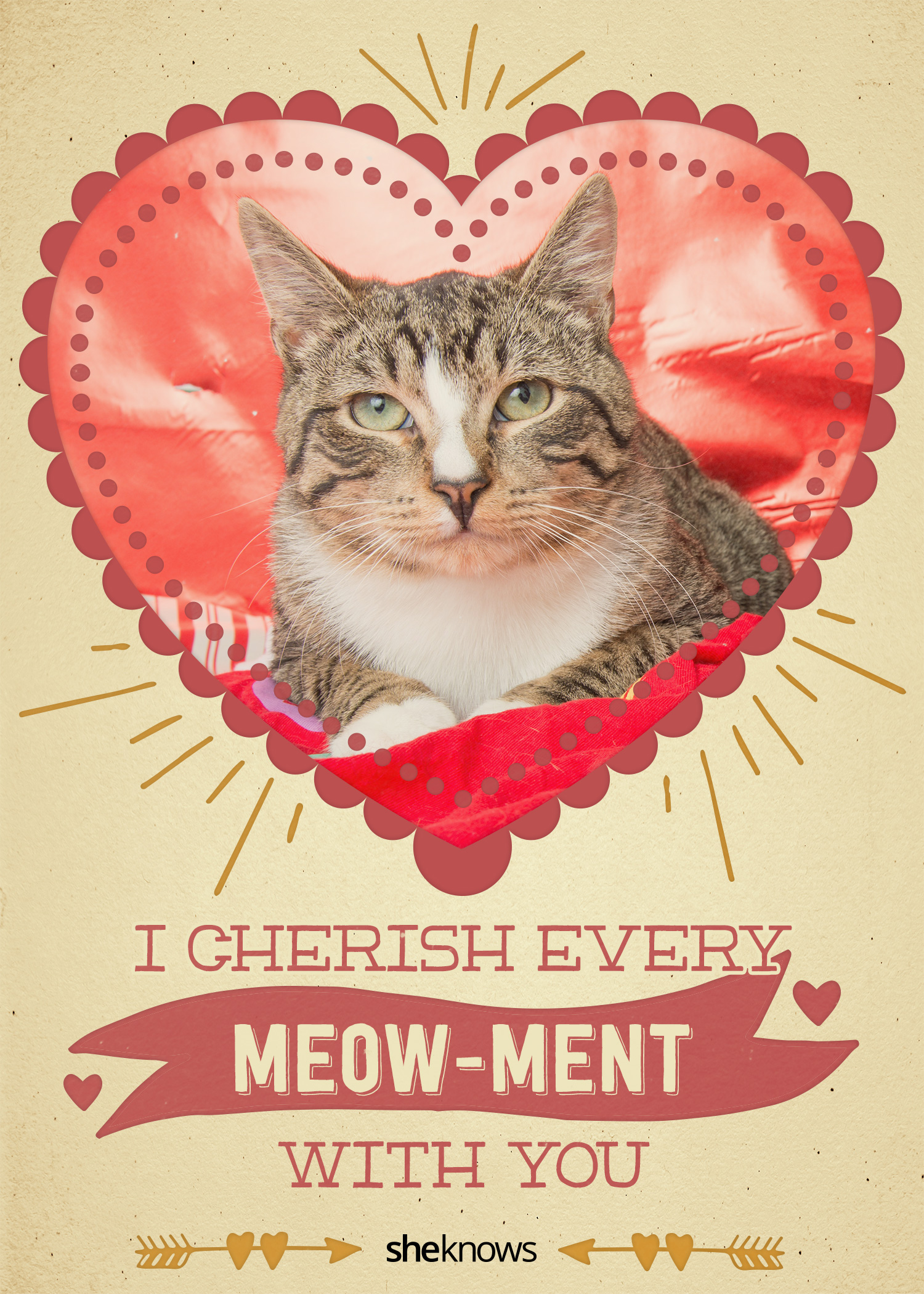 12 kittycat valentine's day cards that will make you aww