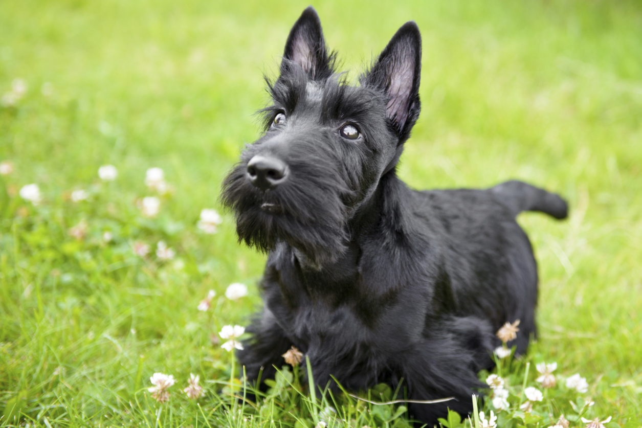 Top  Cutest Small Breed Dogs