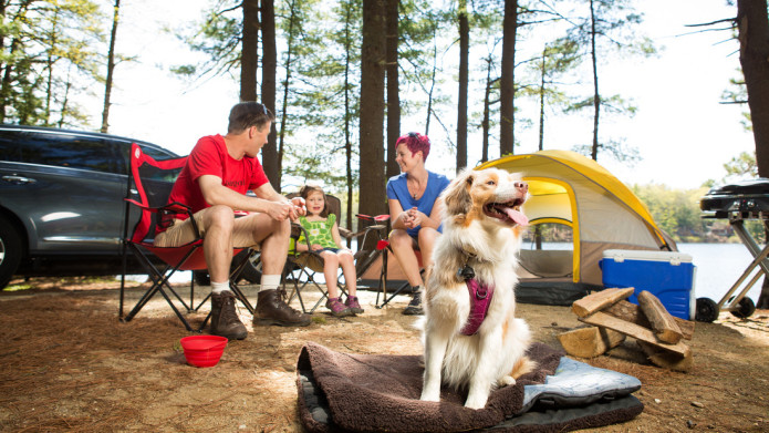 6 Tips to follow when you take your dog camping