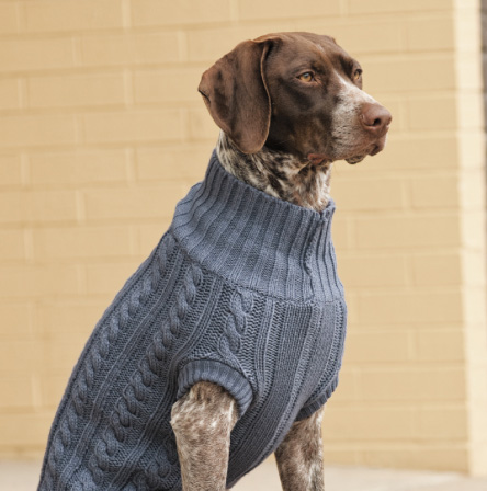 Knitting Pattern Large Dog Sweater : 18 Outfits your big dog might actually like