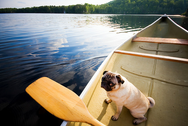 Keep French bulldogs and these other pups away from deep water