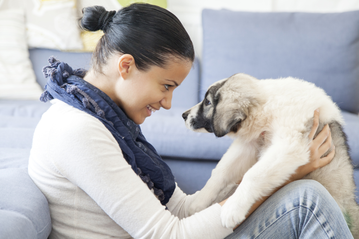 Everything you need to know about your pooch