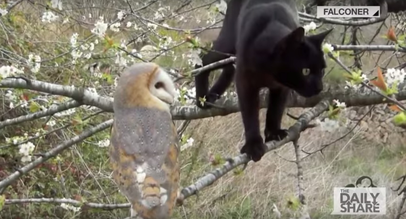 Unlikely Friends Animals Youtube Barn Owl And Black Cat