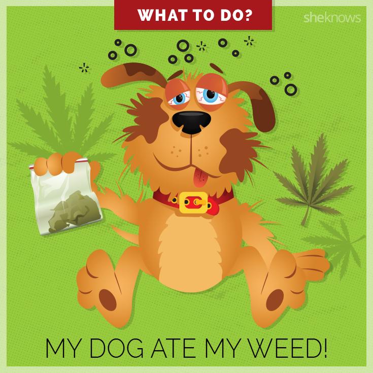 Can My Dog Eat Xanax