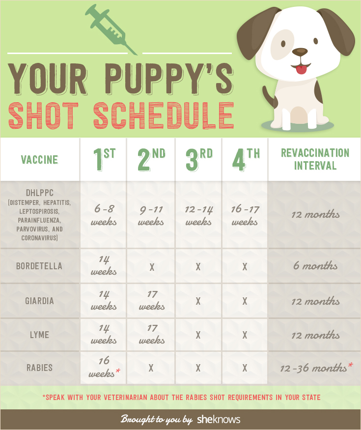 It is a photo of Dramatic Puppy Vaccination Schedule Printable