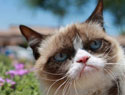 25 of the best grumpy cat moments