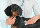6 Nasty diseases you can get from your pet