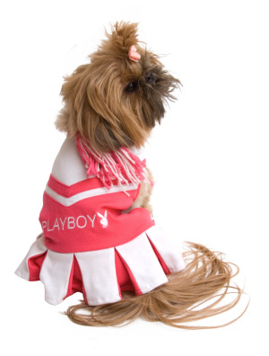 Dog cheerleader