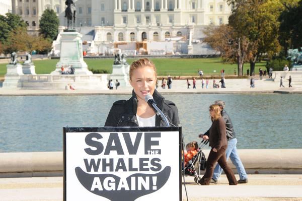 Hayden Hero to whales