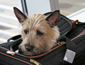 These are the airlines that allow pets to travel in-cabin with you