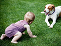 Should you get a dog before or after you have a baby?
