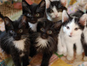 100 Black-and-white kittens abandoned at a Bay Area shelter