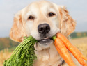 Can your dog or cat become a vegetarian?