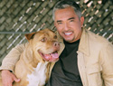 Dog Whisperer Cesar Millans top dog training tips