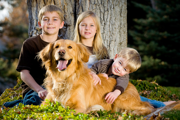 Golden Retriever and Kids