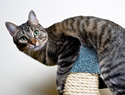 Is Your Indoor Cat Getting Fat? Here's How to Get 'Em Moving