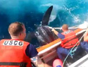 Coast Guard saves 800-pound sea turtle from certain death (VIDEO)