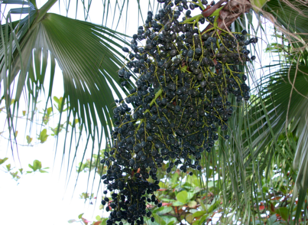 Acai berries