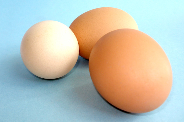 Economical and nutritious eggs
