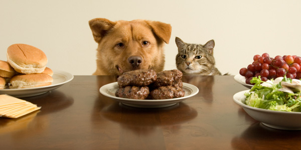 Dog and Cat about to Eat Hamburgers