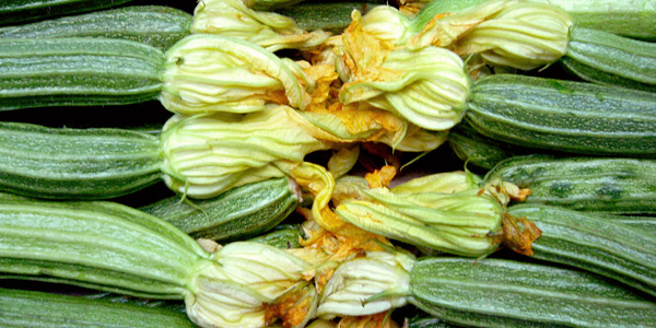 Squash blossoms recipes
