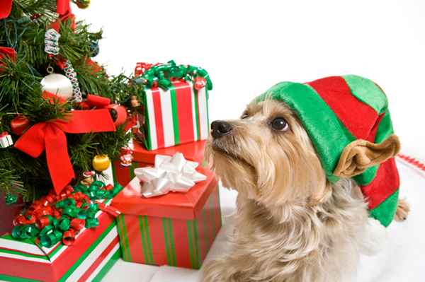 Dog-friendly holidays