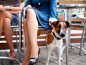Top pet-friendly restaurant chains