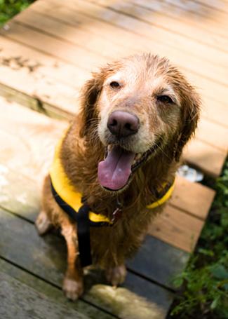 Dog in life vest