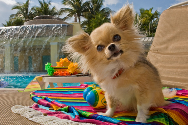 Top 5 pet friendly global hotel chains for Best hotels for pets