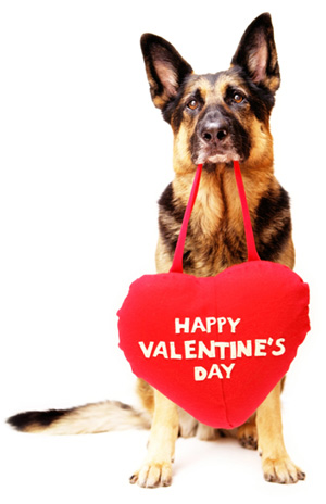 Dog with Valentine's Day Heart Who doesn't go out drinking with his buddies,