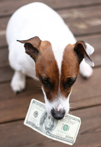 Dogging Holding Money