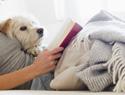 17 Dogs that make incredible snuggle buddies
