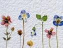 Make a dried flower wall quilt