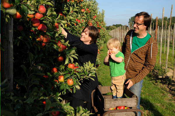 Family harvesting apples