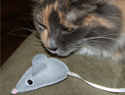 How to make felt mice toys for cats