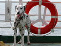 Float away this summer with this pet-friendly cruise line