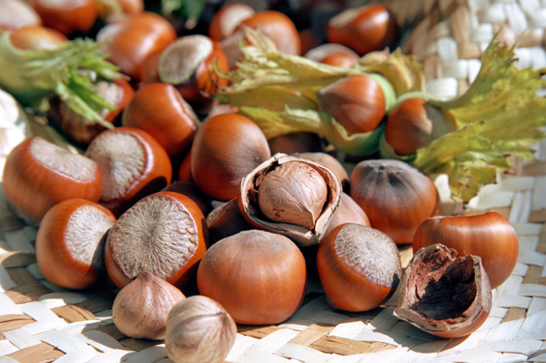 Hazelnuts in savory dishes